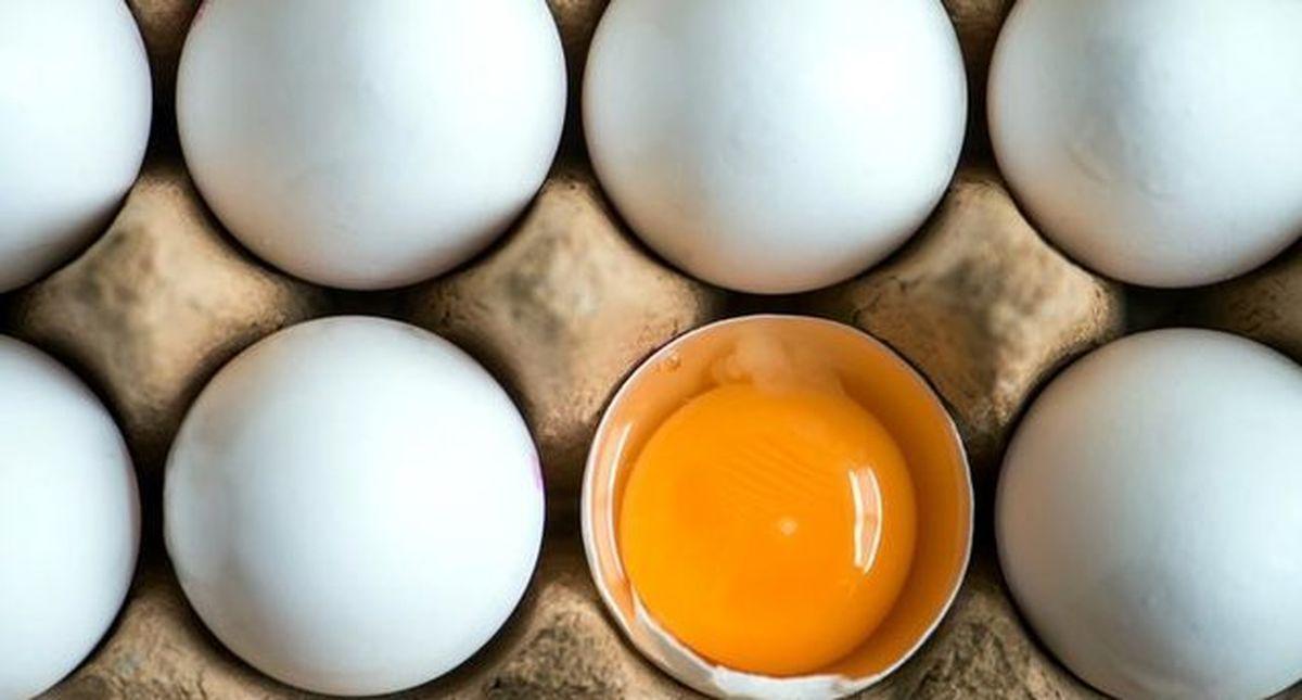 مصوبه مربوط به واردات تخم مرغ نطفه دار گوشتی ابلاغ شد