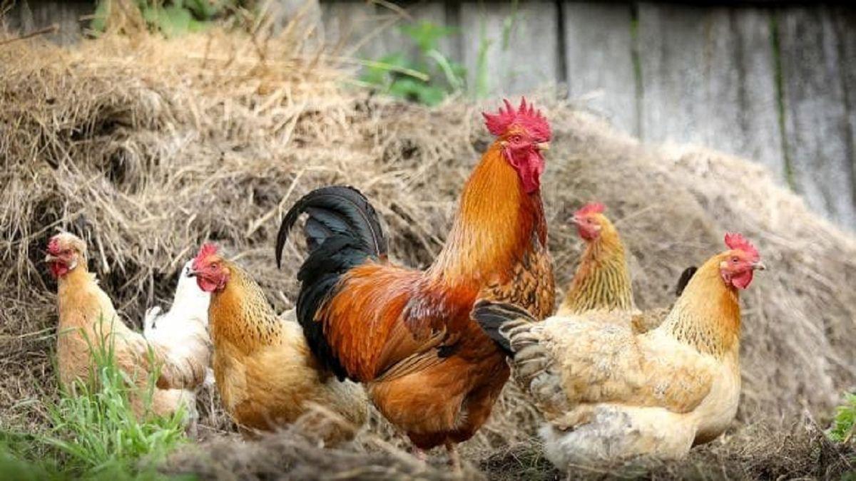 هشدارهایی در مورد پرورش پرندگان در خانه