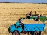 خرید گندم از مرز 6میلیون تن گذشت