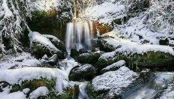 چهره زمستانی جنگلهای رامسر +عکس