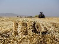 ضایعات 15 درصدی نان و گندم در کشور