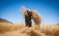 حل مشکل بانکیِ صادرات گندم روسیه و قزاقستان به ایران