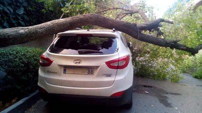 تصادف درخت و هیوندا در توفان تهران +عکس