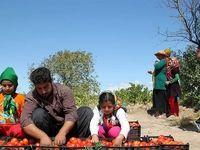 اصلاح لایحه حمایت از توسعه و ایجاد اشتغال پایدار درروستاها