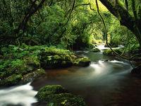 ورود به طبیعت تا به کجا؟