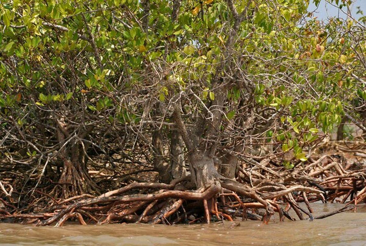 با مرگبارترین درختان دنیا آشنا شوید + عکس