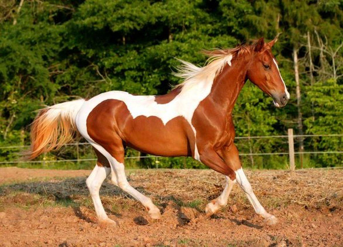 شرکتهای بیمهای صنعت پولساز پرورش اسب را از یاد بردند!