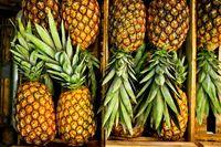 میوههای لوکس در بازار چند؟