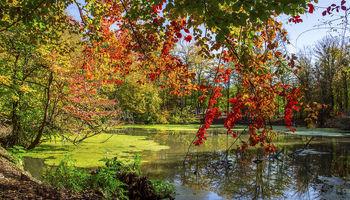 پاییز حیرت انگیز زیباترین دریاچه شمال ایران +عکس