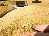 روسیه به زودی صادرات گندم به ایران را از سر میگیرد