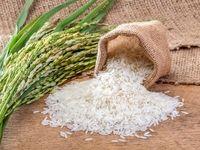مظنه گرانترین و ارزانترین برنج داخلی و وارداتی؟/ بررسی نوسانات قیمت برنج در 15ماه گذشته