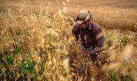 کمیسیون کشاورزی مجلس به قیمت گندم معترض شود/ پیگیری تخلفات دولت از وظایف وکلای مردم است