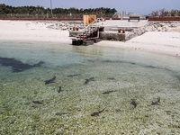 کوسههای بیخطر در سواحل کیش +تصاویر