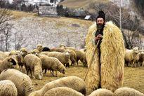 چوپانی در کنار گوسفندانش عکس روز نشنال جئوگرافیک