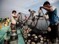 ماهیگیری در آبهای یمن +تصاویر
