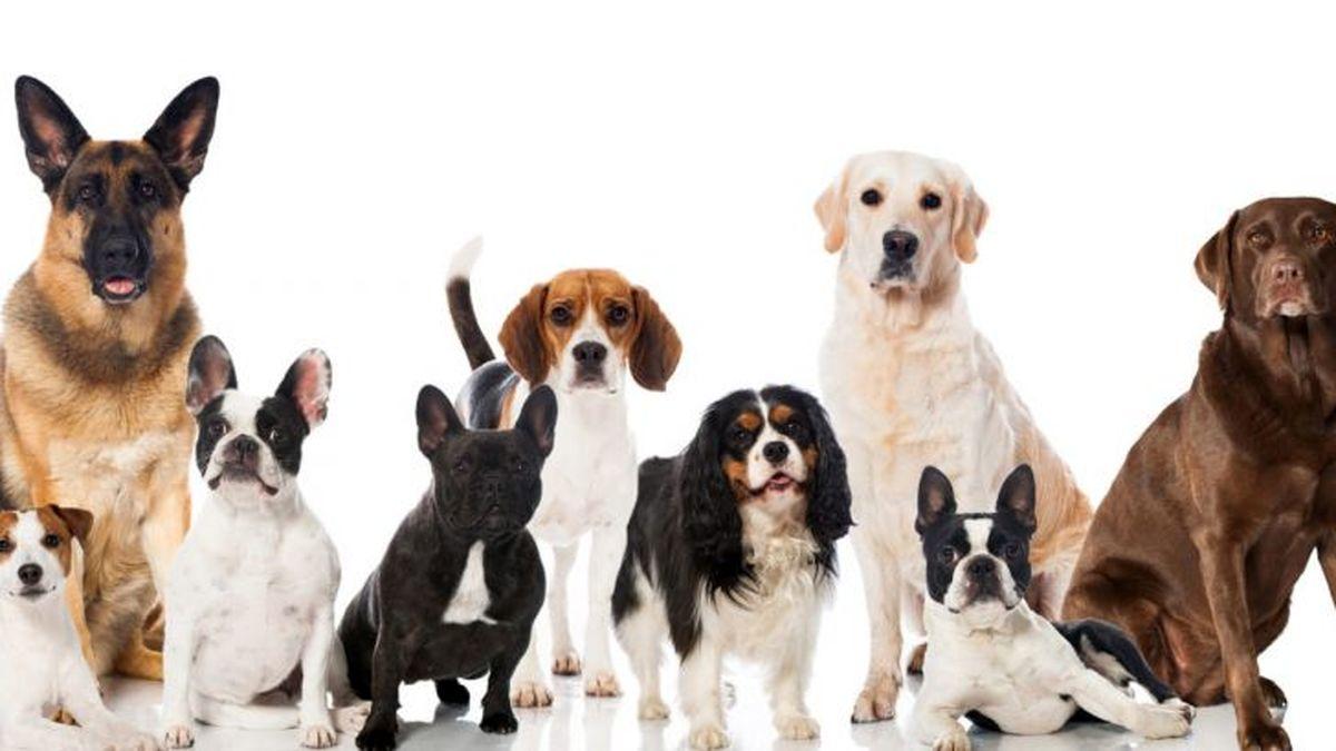 شرح و خصوصیات ظاهری سگها