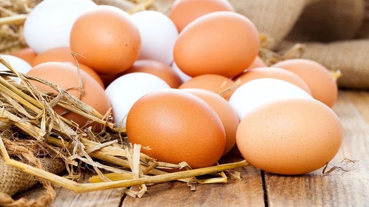 مجوز واردات ۱۰هزار تن تخم مرغ صادر شد