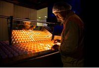 یک روز در کارخانه تلاونگ؛ برای شناخت بهتر سفیده تخممرغ تلاونگ