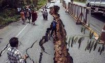 یک کشته و دهها زخمی در نتیجه زلزله ۵.۴ ریشتری در چین +فیلم