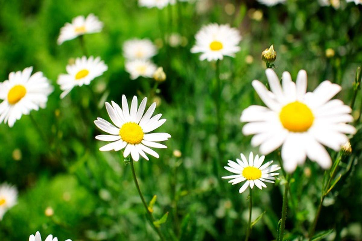 ۱۰ گیاه دارویی با خواص بینظیر