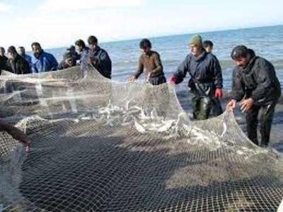 خطر انقراض ماهیان استخوانی دریای خزر
