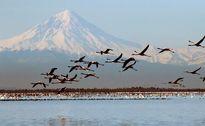 مرگ ٣٠هزار پرنده مهاجر 