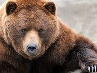 آدمهایی که به خرس هم رحم نمیکنند