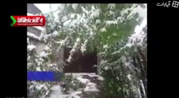 بارش برف در کلاردشت +فیلم