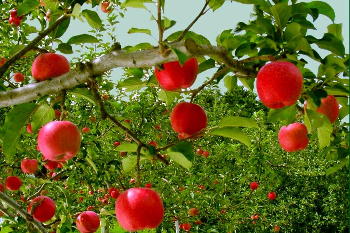 توصیههای هواشناسی برای  کشاورزی