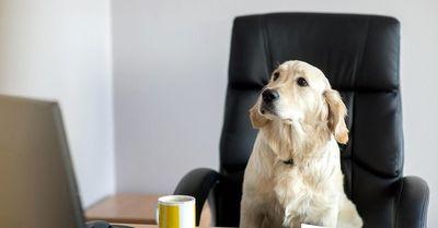 استخدام سگها در آمازون!