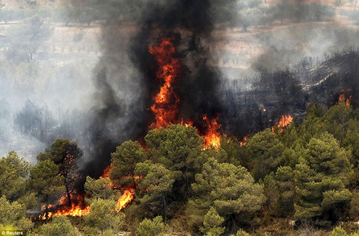 تراژدی خاکستری شدن جنگلها