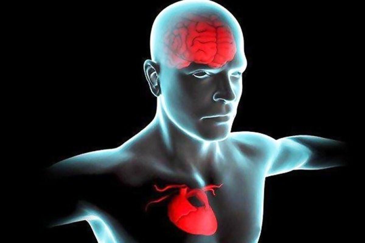 قلب سالم تر موجب عملکرد بهتر مغز می شود