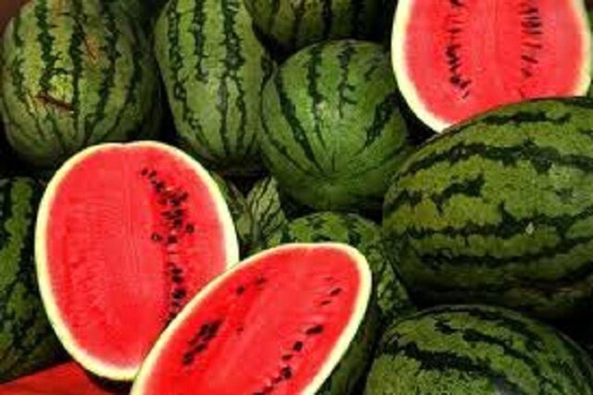 صادرات 117هزار تن هندوانه در دو ماه