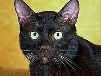 پیدا شدن گربه گمشده بعد از ۱۵سال +فیلم