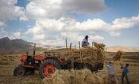 سردرگمی کشاورزان به دلیل اعلام نشدن نرخ خرید تضمینی/ خطر دور شدن از خودکفایی گندم