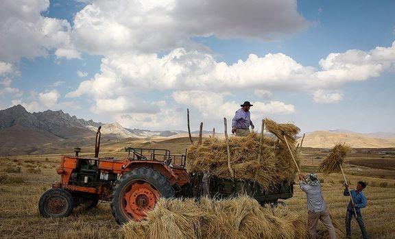 قیمت پایین خرید تضمینی گندم، کشاورزان را فراری داد!