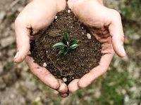 قاچاق خاک حاصلخیز کشور در پوشش صادرات سیمان و گلدان