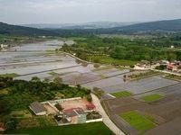 زوایایی دیدنی از کاشت برنج در مازندران +تصاویر