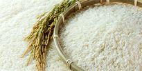۴درصد؛ تعرفه جدید واردات برنج
