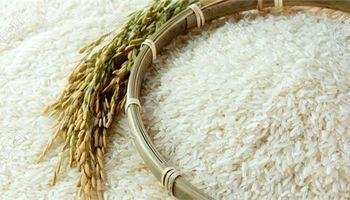 کاهش 15درصدی قیمت برنج ایرانی در بازار