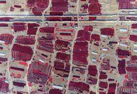 صحنهای زیبا از برداشت فلفل قرمز در چین +عکس