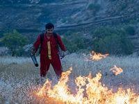 آتش سوزی در جنگلهای بلوط +عکس