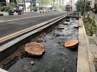 قطع درختان تنومند خیابان ولیعصر +عکس