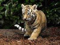 اولین مورد ابتلای حیوان به کرونا در آمریکا ثبت شد