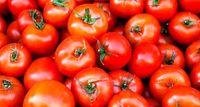 جدیدترین قیمت گوجهفرنگی اعلام شد
