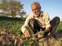 سود کشاورزان در جیب دلالان
