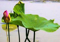 شاهکار طبیعت در گیلان +تصاویر