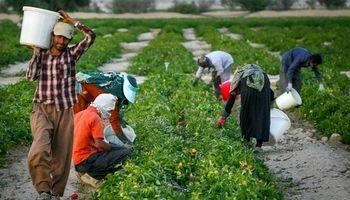 124هزارتن کودشیمیایی مورد نیاز استانهای شمالی تامین شد