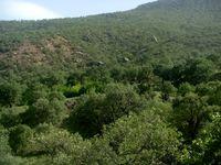 با روزی ۳۴تومان میتوان از جنگل حفاظت کرد؟