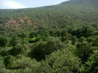 درختان از ترس انسان، پشت گنجشکها پنهان میشوند
